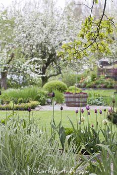 Trädgårdsflow. Fin vårbild! Bloggen värd besök