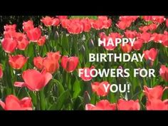 Happy Birthday Greeting Card Video With Flowers