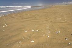 90 mile beach New Zealand, Beach, Outdoor, Outdoors, The Beach, Beaches, Outdoor Games, The Great Outdoors