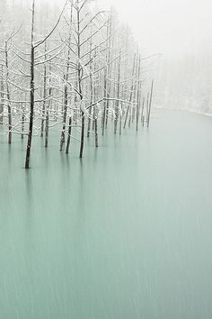 landscape photography, winter, river and trees, soft pastel colors - so beautiful Beautiful World, Beautiful Images, Landscape Photography, Nature Photography, Photography Poses, All Nature, Winter Beauty, Pics Art, Winter Scenes
