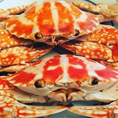 gigi._hvinegar,cold,seafood,crabs,simple,dippingsauce,lover,fresh,homecook,light,delicate,ginger,sweetmeat,texture,quick,dishSteamed#Crabs#Fresh#Cold#Dish#Light#Seafood#Lover#Vinegar#Ginger#DippingSauce#SweetMeat#Delicate#Texture#Simple#Quick#Homecook