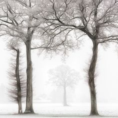 High 50 by Lars van de Goor on the Netherlands White Art, Black And White, End Of The World, Winter Scenes, The Great Outdoors, Netherlands, Van, Landscape, Canvas