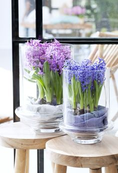 les jacinthes comme d coration de printemps decoration florale pinterest jacinthe jardins. Black Bedroom Furniture Sets. Home Design Ideas
