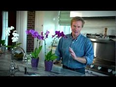 Growing Orchids Indoors: At Home with P. Allen Smith