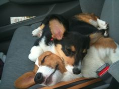 There is nothing more adorable in this world than a sleeping corgi, unless it's TWO sleeping corgis!!!!!