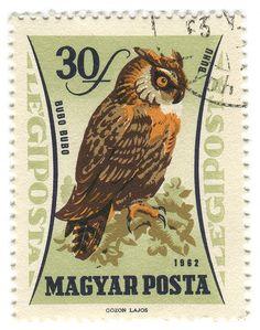 love this owl!   1962 Hungary Postage Stamp