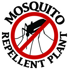 9 Plants That Bug Bugs U2014 Including Mosquitoes