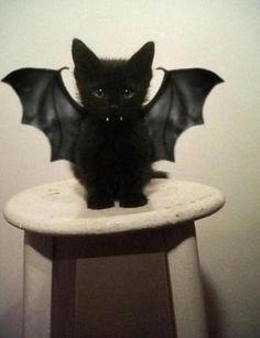 black kitten bat