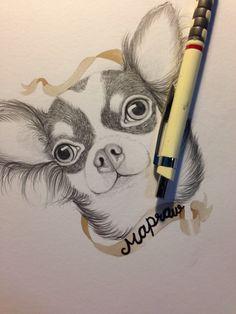 Chihuahua my draw.