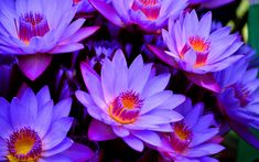 Vintage flower wallpapers for mac free sharovarka pinterest purple lotus flower wallpaper picture with high definition wallpaper 2560x1600 px 47111 kb mightylinksfo