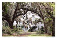 wedding venue, moss trees, white house, cypress trees, wedding day, Cypress Trees Plantation Wedding, Charlotte NC Wedding Photographer, Kristin Vining Photography