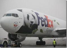 FedEx Panda Express.  #FedEx #Panda_Express