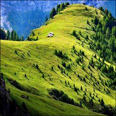 Mountain Meadow, Val di Fassa,Italy