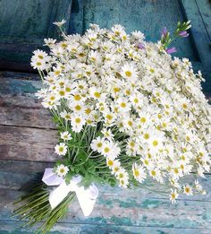 Find images and videos about flowers and daisy on We Heart It - the app to get lost in what you love. Happy Flowers, White Flowers, Beautiful Flowers, Wedding Bouquets, Wedding Flowers, Daisy Love, Flower Aesthetic, Ikebana, Floral Arrangements