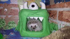 novelty bed African pygmy hedgehog www.hedgepods.com
