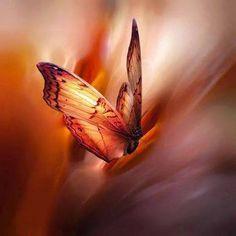 un battito d'ali