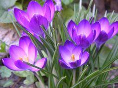 Paisajes De Flores | paisajes flores naturales