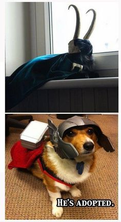 Loki and Thor need these costumes for Halloween! Dog version for Loki though. Dc Memes, Marvel Memes, Avengers Humor, Loki Cat, Loki Thor, Loki Laufeyson, Funny Cute, Hilarious, Wtf Funny