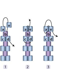 Peyote Stitch Basics (Even/Odd Count, Edge Increases/Decreases) PDF-Download: http://www.beadcave.com/julia/_downloads/inc_dec_tut.pdf