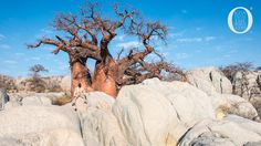 Kubu Island is a national monument that lies on the western shoreline of the Sua Pan, a natural depression of Botswana. Tree of life, archeological facts.