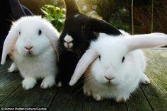 A bunny trio!