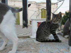 Island, Explore, Cats, Animals, Gatos, Animales, Animaux, Islands, Animal
