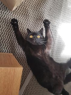 My cat being weird by SpookyMould cats kitten catsonweb cute adorable funny sleepy animals nature kitty cutie ca