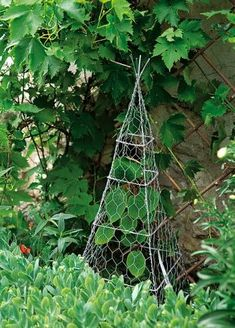 A small tuteur or plant support made out of chicken wire