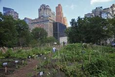 New York, New York Perhaps no location is more urban than New York City, yet farming works well there, too. Case in point: Battery Urban Farm. This one-acre educational farm located in the historic Battery Park at the southern tip of Manhattan… Detroit Urban Farming, Battery Park, City Farm, Farm Photo, Vegetable Garden, Around The Worlds, Green, Plants, Photo Credit