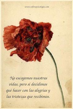 #psicología #emoción #imagen #imagenes #frase #frases #pensamiento #pensamientos #reflexión #reflexiones #flores