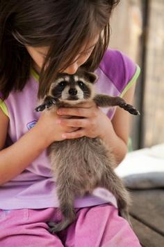Baby Raccoon.......I LOVE raccoons.