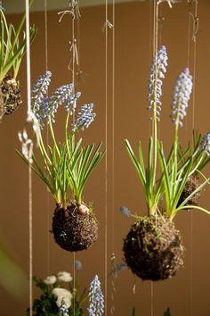 Pequeos jardines colgantes jardineria-y-paisajismo