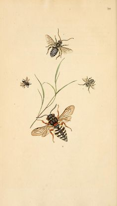 v.12 (1807) - The natural history of British insects : - Biodiversity Heritage Library