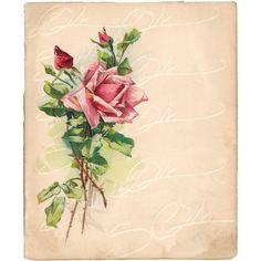Vintage Victorian Rose Rose Full Color Illustration on Aged Paper... ($4) ❤ liked on Polyvore