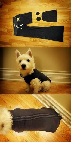 Turn your old sweaters into beautiful clothes for your dog - 60 Second DIY Dog Sweater (made from old sweatpants! Dog Clothes Patterns, Dog Crafts, Puppy Clothes, Dog Pattern, Dog Sweaters, Animal Projects, Diy Stuffed Animals, Training Your Dog, Dog Accessories