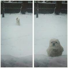 Snow run!
