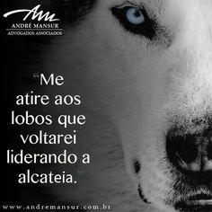 Lobo Akela