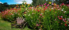 How to plant wildflowers in the fall