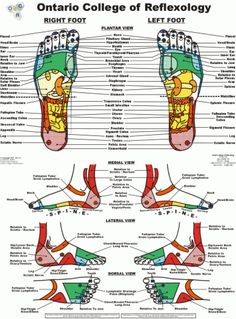 reflexology for cancer | ... Reflexology has been known to help clients deal with physiological