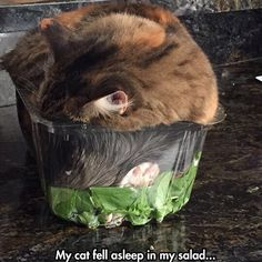 Eating healthy is exhausting.