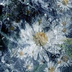 Frozen Daisies by helencrawfordgibb at zippi.co.uk Daisies, Abstract Art, Vibrant, Frozen, Canvas Prints, Artwork, Margaritas, Work Of Art, Photo Canvas Prints