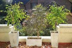3 plantas con macetas de fibrocemento