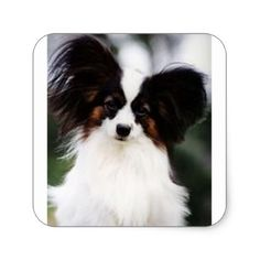 #Papillon 2 square sticker - #Petgifts #Pet #Gifts #giftideas #giftidea #petlovers