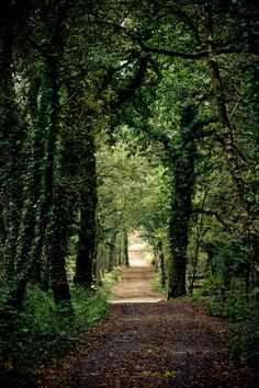 Forested path along the Avon Heath in Dorset, England | PixelMaze Photography