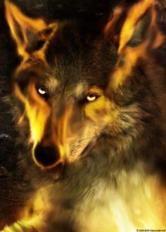 Orange Wolf More