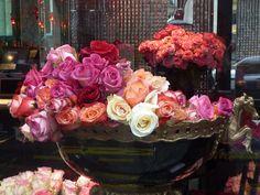 Roses Costes Dani Roses.www.albertalagrup.com