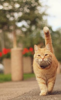 I don´t know what ginger got inside, my best experiences are with my ginger cat