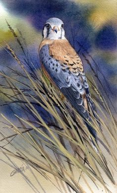 Original oil and watercolor paintings of wildlife, birds and landscapes by artist Joe Garcia. Watercolor Painting Techniques, Painting & Drawing, Watercolor Paintings, Bird Paintings, Watercolor Bird, Watercolor Animals, Animal Totems, Bird Drawings, Wildlife Art