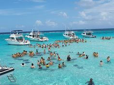 Stingray City, Cayman Islands.  The dark images under the water are the sting rays who come in for food.  They've learned to know when the boats are in with tourists.  This is an experience everyone should have when they are on Grand Cayman.  For more info:  ASPEN CREEK TRAVEL - karen@aspencreektravel.com