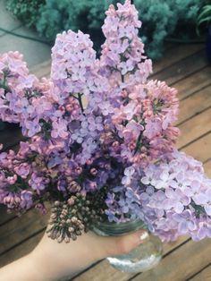 wethinkwedream:  i love lilacs so dang much oh my gosh i cant wait